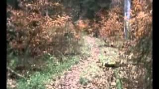 Hearts Content Interpretive Trail Hike - Part 2