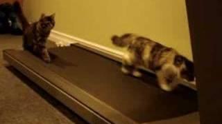 Treadmill Kittens
