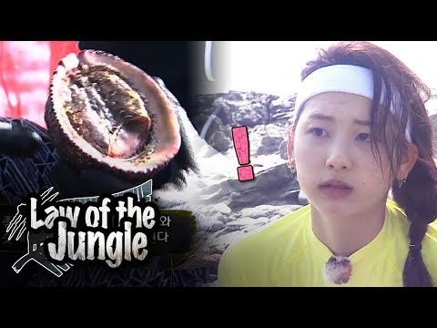 Kim Jin Kyung It tastes like pork belly Law of the Jungle Ep 307