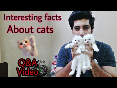 Interesting facts and tricks about cat and kittens | special Q&A video | part 2 | in hindi and urdu