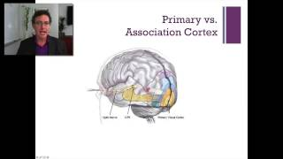 3:4   Lecture-4   The Occipital Lobe