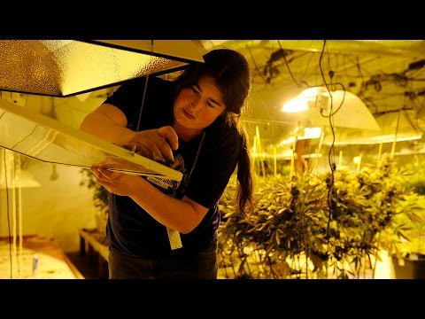 An activist who lives in both Denver and D.C. compares the cities' very different pot programs