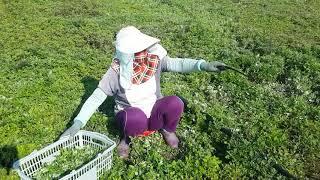 Người việt làm nông nghiệp ở hàn quốc