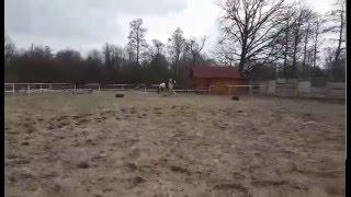 Stajnia Fryszerka koń Michał skoki marzec 2016