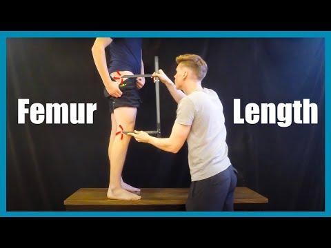 Femur Length Measurement