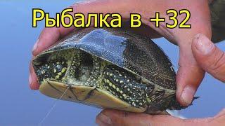 Рыбалка в 32 Клюют черепахи и белые амуры на зеленый горошек My fishing
