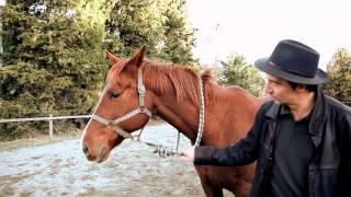 Equi Coaching-Formation et Coaching assisté par le cheval - NOUVEL ACTE