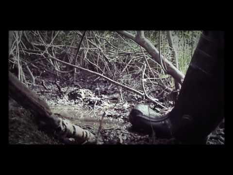 Memories, first films - Walk in wellies DEMAR MAXX S4
