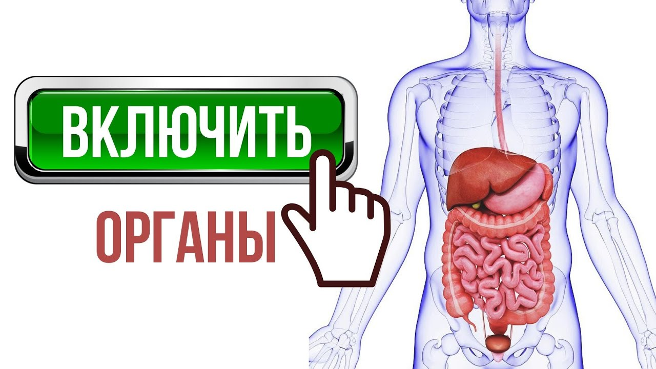 ВКЛЮЧИТЬ ОРГАНЫ ПИЩЕВАРЕНИЯ 💡 Желчный пузырь, печень, желудок, кишечник, поджелудочную