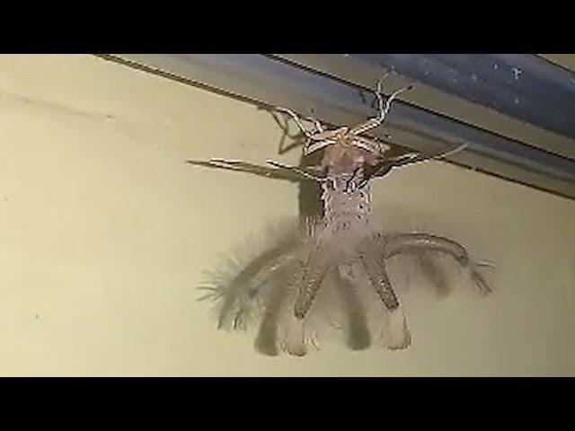 Un hombre encuentra una extraña criatura alada extraterrestre el techo de su casa en Indonesia