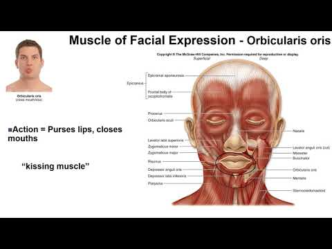 Muscle of Facial Expression