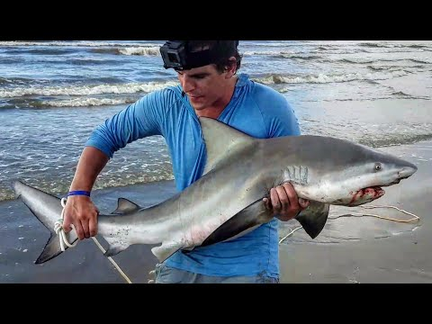 How To Catch A Shark From The Land: For Beginners