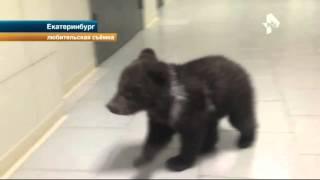 Медведь посетил пивную в Екатеринбурге