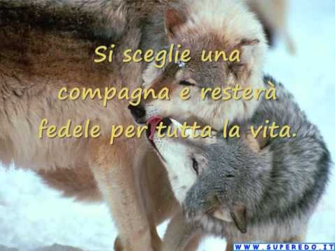 Amato IL LUPO secondo i Nativi - YouTube MP16