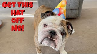 Reuben the Bulldog: Happy 5th Birthday