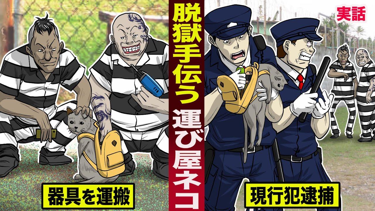 【実話】脱獄を手伝う...運び屋のネコ。囚人に器具を運搬して...現行犯逮捕された。