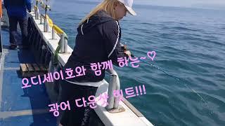 오천항 조은낚시 오디세이호 광어 다운샷 8명 조황 입니…