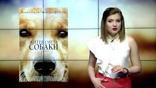 131 Кіноманія. Життя собаки