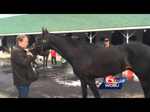 Kentucky Derby: Benson horse trainer says Mo Tom is Anthony Davis of horses
