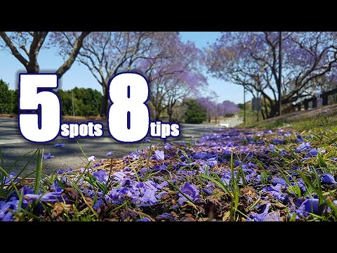 5 Jacaranda Hot Spots And 8 Photography Tips | Brisbane | BNE Lens