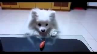 Собачка с короткими лапками      Cute little doggie =