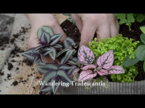 Relax with Your Own Zen Garden Creation 🌱  ||  West Coast Gardens
