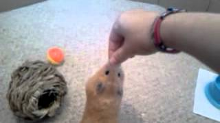 how to train your hamster 3 more tricks