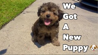 puppy haul