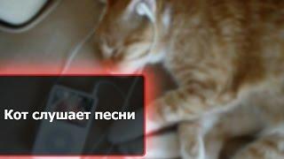 Кот слушает матерные песни