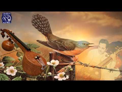 Cuckoo Songs on Veena By Chitti Babu