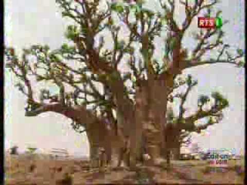 a la decouverte du baobab un arbre mystique et embleme du senegal youtube. Black Bedroom Furniture Sets. Home Design Ideas