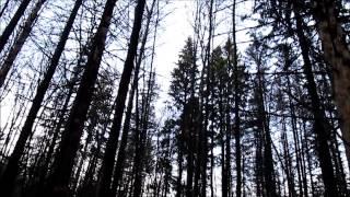 Поход выходного дня: Зеленограда и окрестности. прогулка  20.12.14