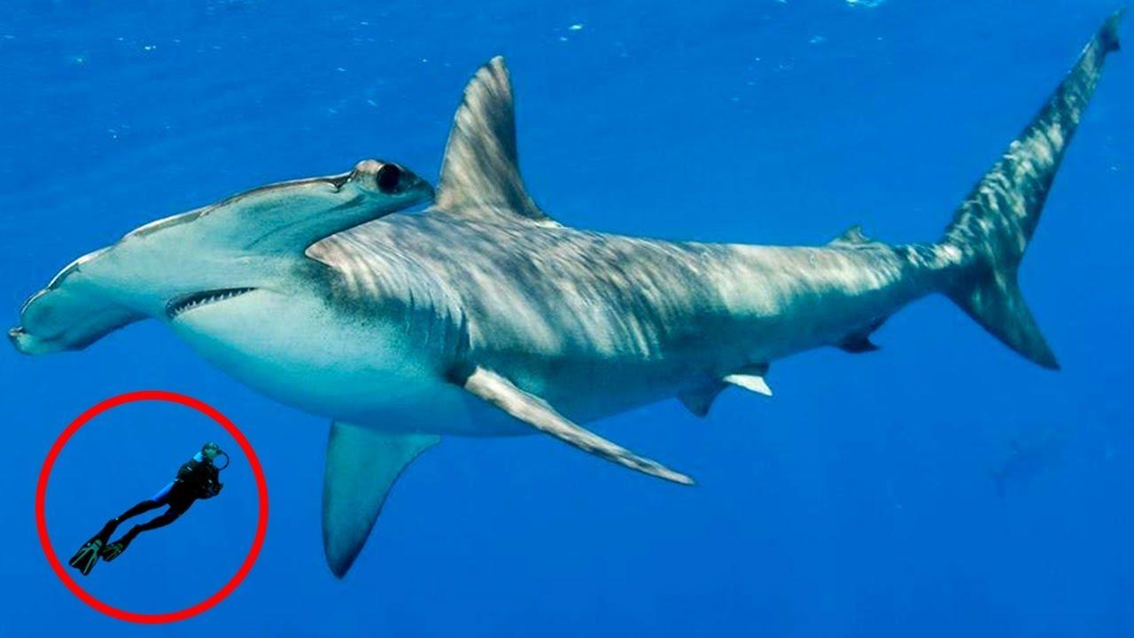 most-fascinating-shark-behavior