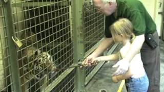 Behind the scenes at London Zoo - Feed the tiger!