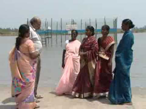 Mud Crab farming and fattening by women – India