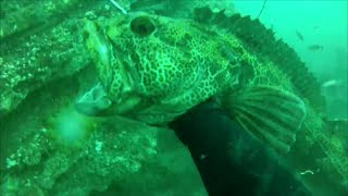 18 Pound Lingcod!! California