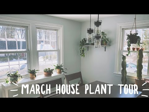 march houseplant tour! | easy care plants!