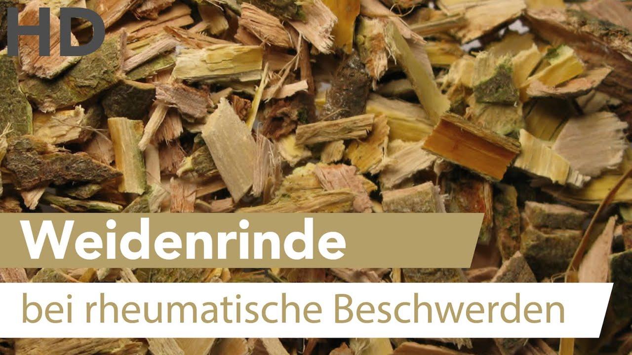 Weidenrinde // Mittel gegen rheumatische Beschwerden, Heilpflanze