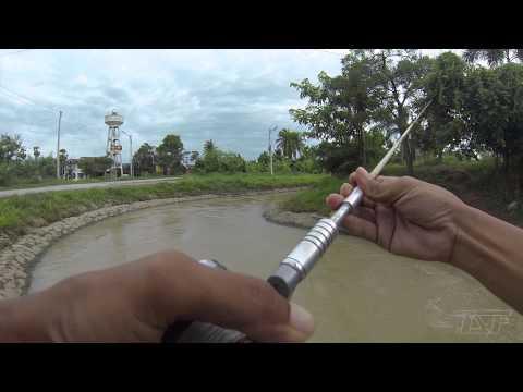 Thai Street Fishing 2