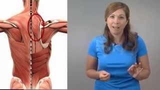 Trucs et étirements pour réduire la douleur musculaire