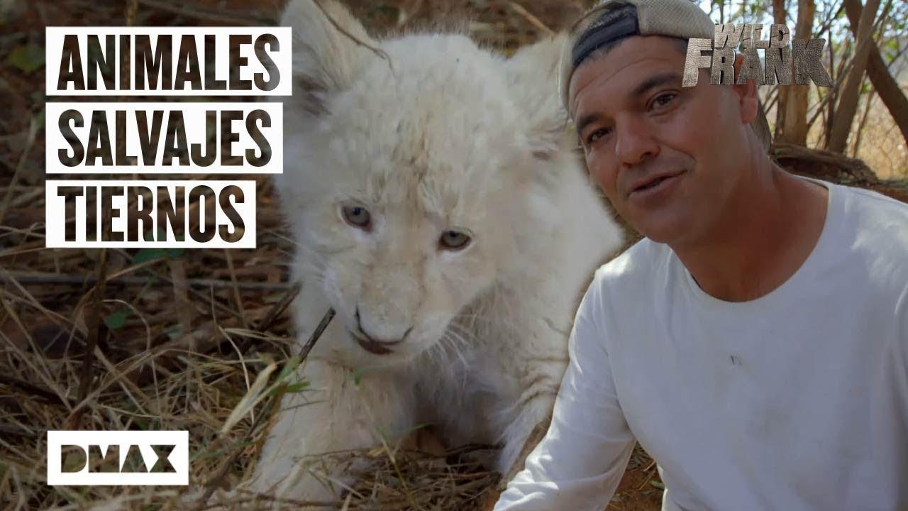 Estos son algunos de los encuentros más entrañables de Wild Frank con animales salvajes
