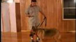 Dog Training - Train Sit, Down, And Stand With Hand Signals