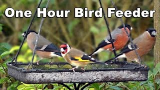 Video Of Birds For Cats To Watch - Bullfinch, Goldfinch, Greenfinch, Blackcap Hd