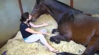 Девушка и лошадь Великая Любовь