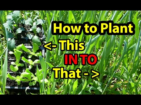 True NO Till Gardening – Growing ( Building ) Soil for Organic Vegetables for beginners 101. Part1