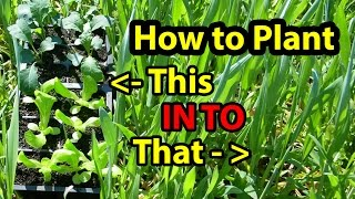 True NO Till Gardening - Growing ( Building ) Soil for Homesteading Vegetables for beginners 101. #1