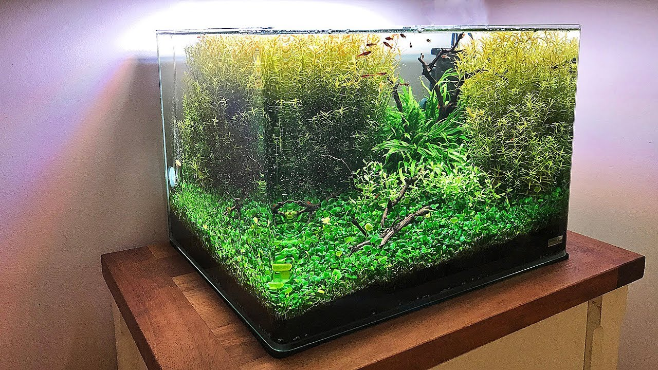 3 Awesome Nano Aquascapes 2 With No Co2 Injection Youtube