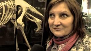 видео Зоологический музей МГУ | Музеи | Олимпиада «Музеи. Парки. Усадьбы»