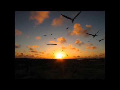 Tern Island Birds at Night