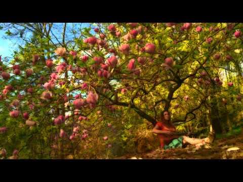 Little Spark ~ Forest Park ~ Rachel Robinson